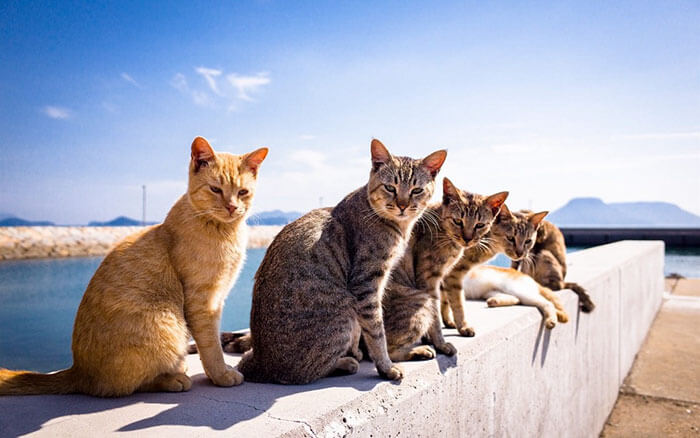 Animals That Look Like They're About To Drop The Hottest Albums Of The Year 30 (1)