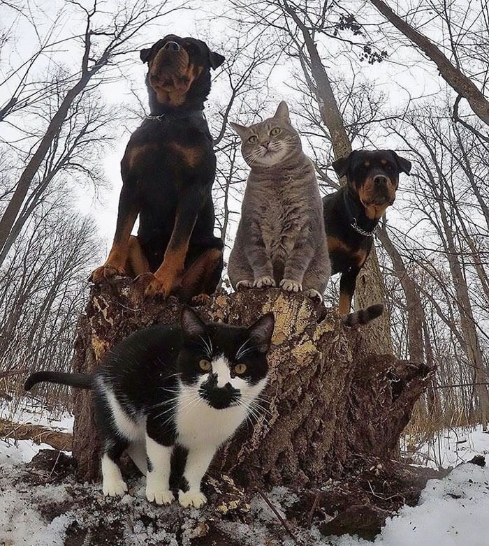 dogs That Look Like They're About To Drop The Hottest Albums Of The Year 5 (1)