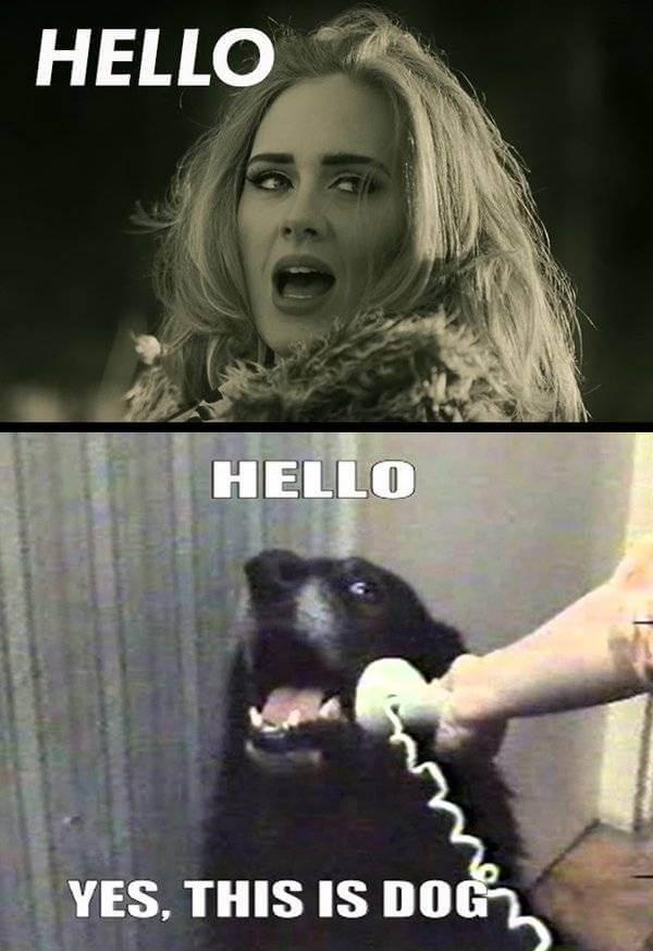 adele hello meme 29 (1)