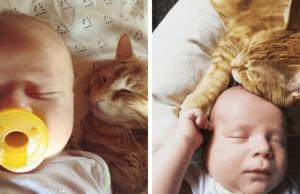 cat hugs baby feat