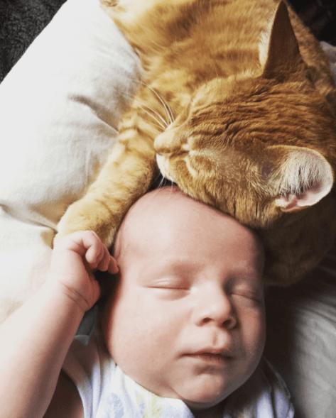 cat hugs sick baby (1)