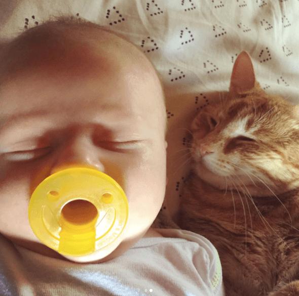 cat hugs sick baby 3 (1)