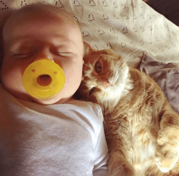 cat hugs sick baby 4 (1)