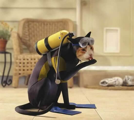 cat costumes 11 (1)