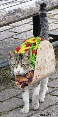 cat costumes 12 (1)
