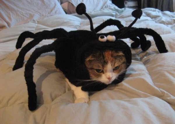 costumes for pets 15 (1)