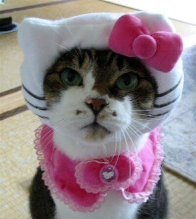 costumes for pets 18 (1)