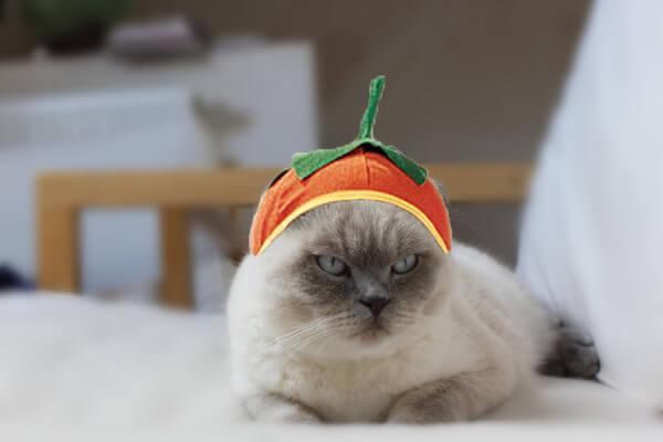 cat costumes 2 (1)