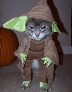 costumes for pets 21 (1)