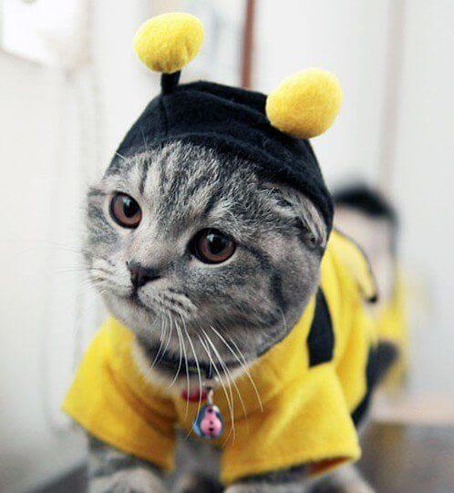 costumes for pets 22 (1)