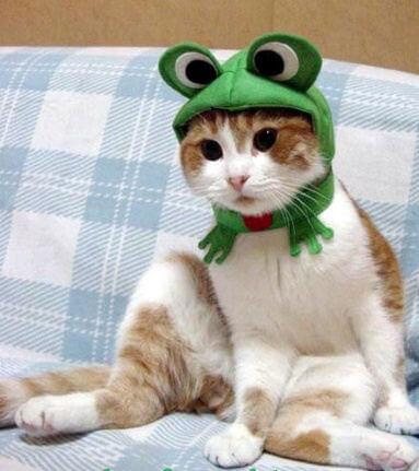 cat costumes 3 (1)
