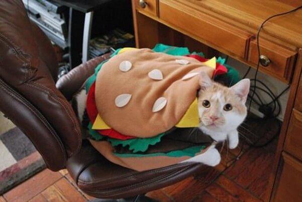 cat costumes 4 (1)