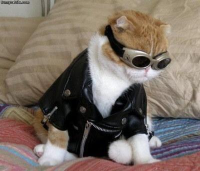 cat costumes 5 (1)