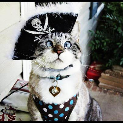cat costumes 6 (1)
