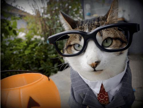cat costumes 7 (1)