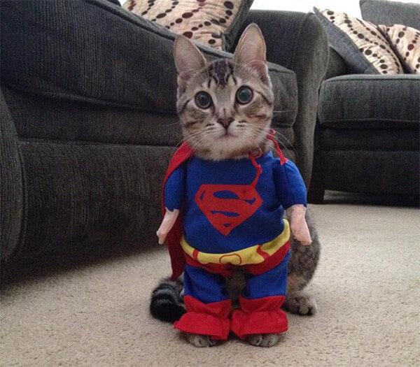 cat costumes 8 (1)