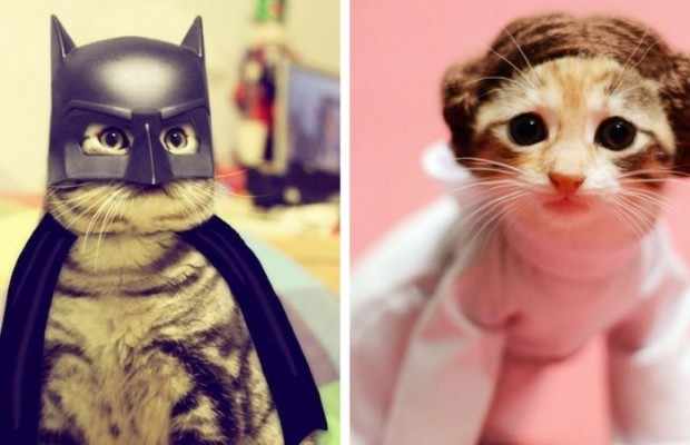 costumes for cats feat