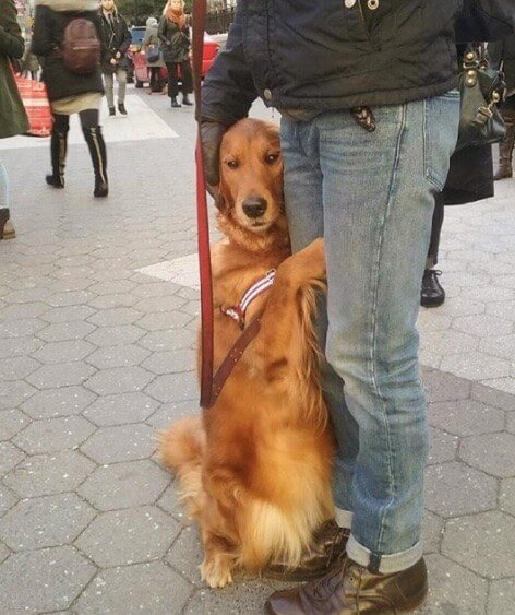 dog giving people hugs 11 (1)