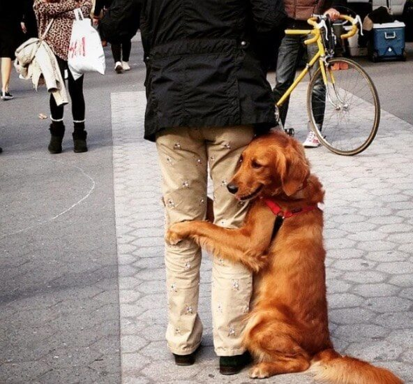 dog giving people hugs 9 (1)