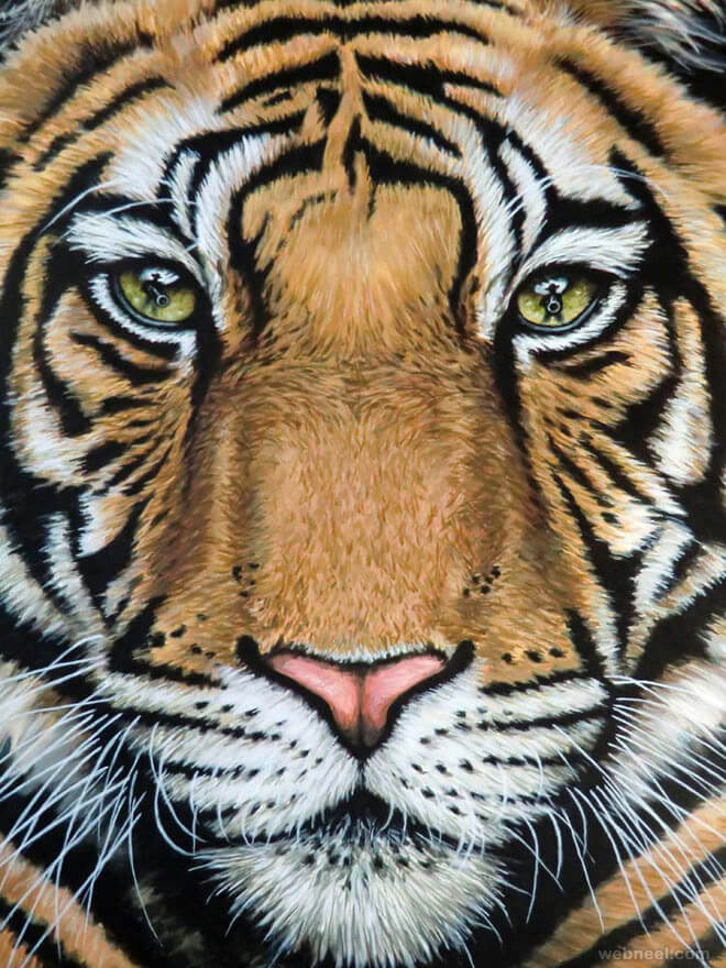 tiger drawing animal drawings animals pencil realistic tigers painting zeug nicole roar last eye cheetah paintings webneel dibujos animales paper