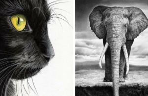drawings of animals feat