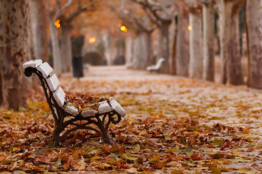 fall pics 14 (1)