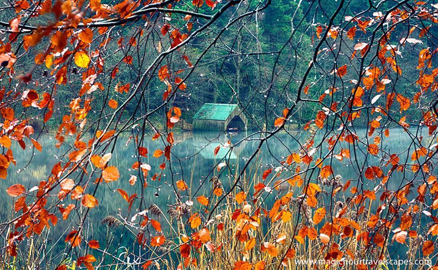 fall pics 15 (1)