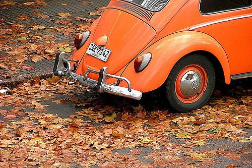 fall photos 27 (1)