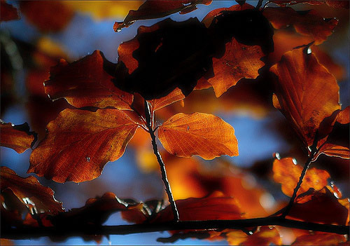 fall photos 30 (1)