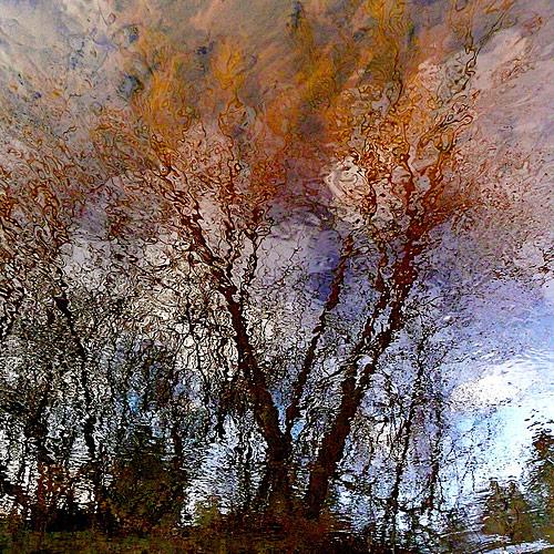fall photos 31 (1)