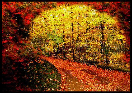 fall photos 33 (1)