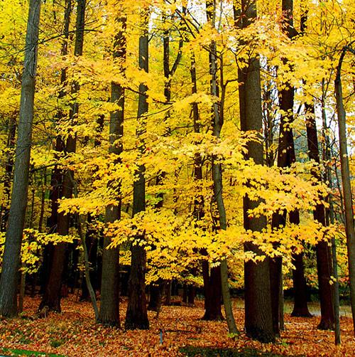fall photos 35 (1)