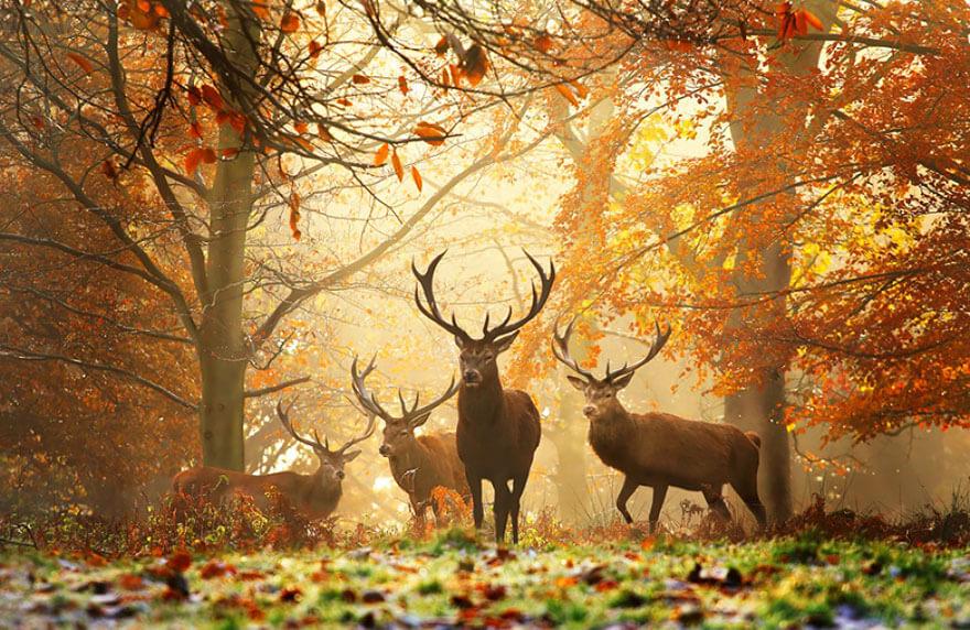 fall pics 4 (1)