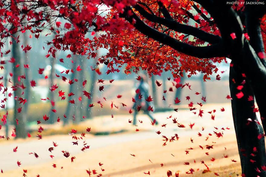 fall pics 5 (1)