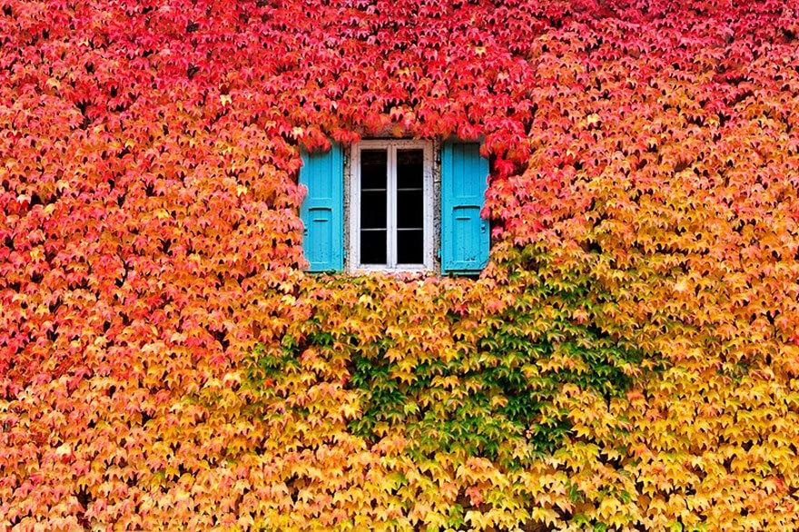 fall pics 6 (1)