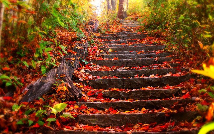 fall pics 8 (1)