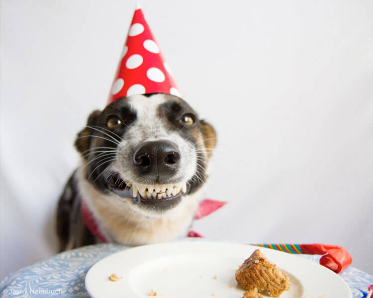 Birthday Ecards Dogs Singing ~ These happy birthday dog images are so cute i m wagging my imaginary tail