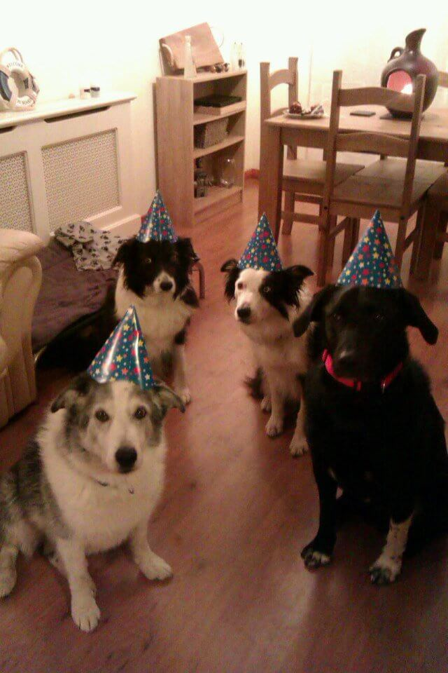 happy birthday dog pictures 10 (1)