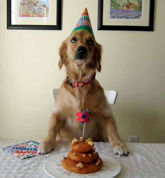 these 31 happy birthday dog images are so cute im wagging