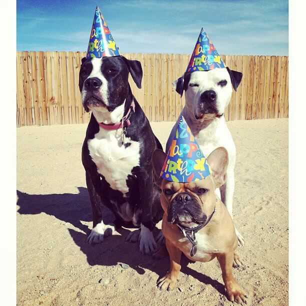 happy birthday pooch images 14 (1)