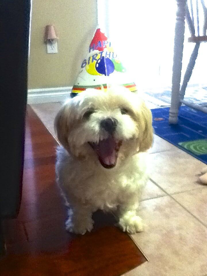 I Like My Birthday Hat The Happiest Dog On This Happy Images List