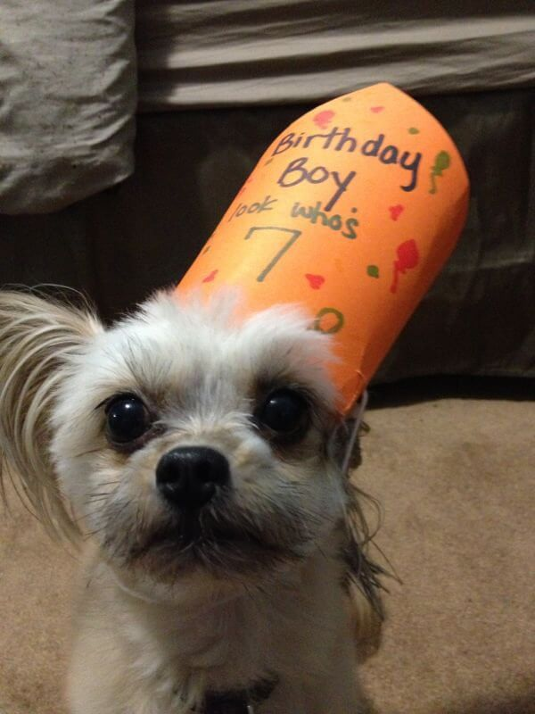 These 31 Happy Birthday Dog Images Are So Cute I M Wagging