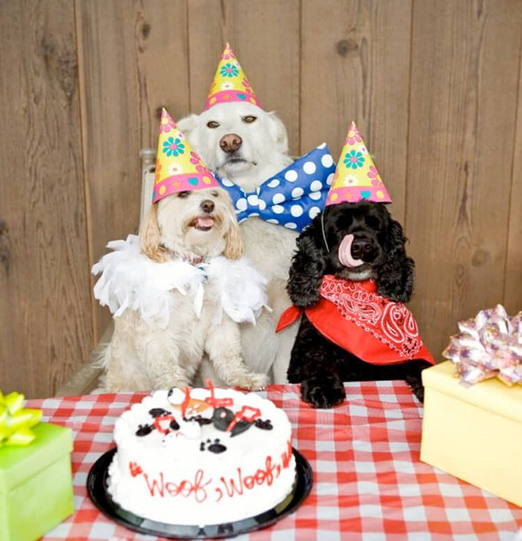 happy birthday dog pictures 2 (1)