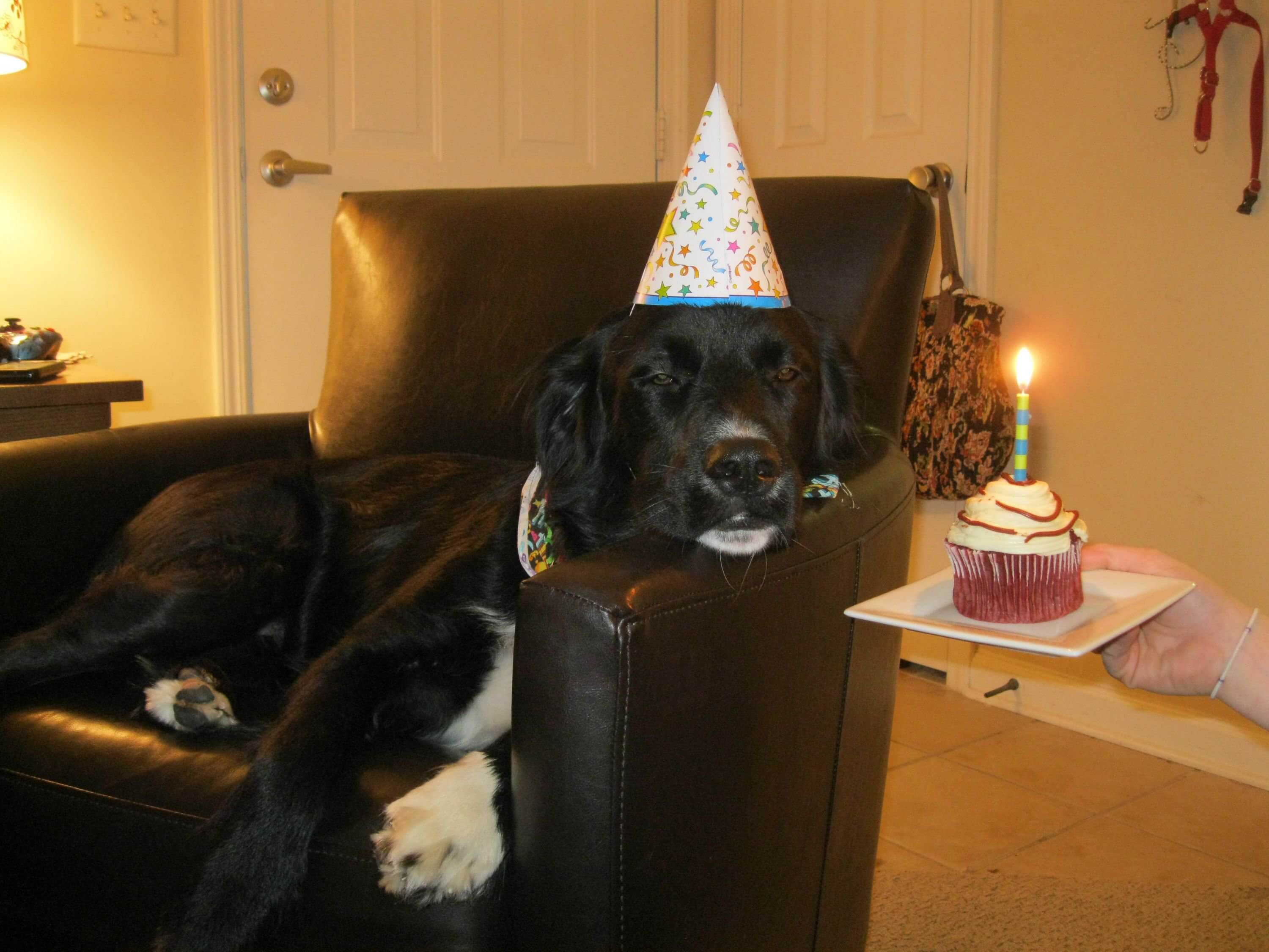 happy birthday pooch images 22 (1)