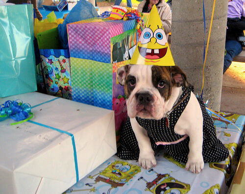 happy birthday dog pics 25 (1)