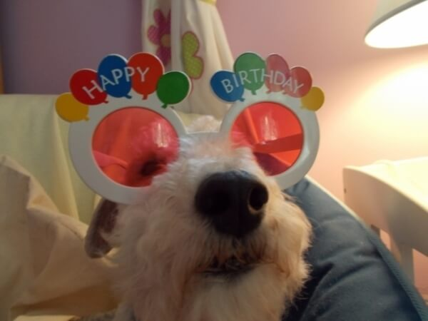 happy birthday dog pics 27 (1)