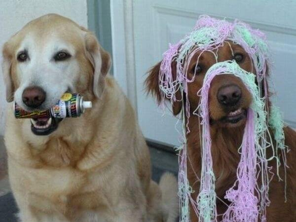 These 31 Happy Birthday Dog Images Are So Cute I'm Wagging