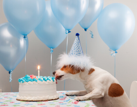 happy birthday dog pictures 4 (1)