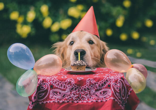 Happy Birthday Dog Pictures 5 1