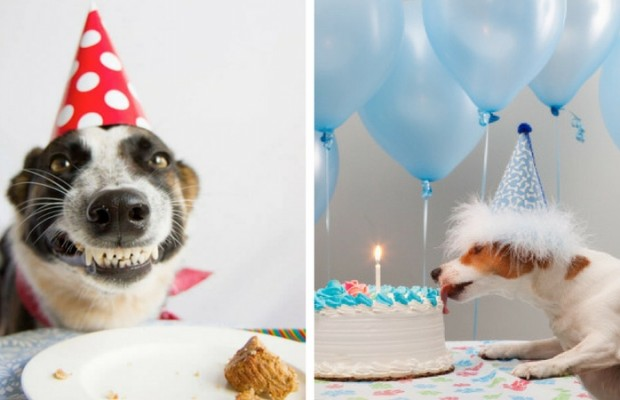happy birthday dog images feat